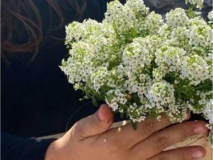 Fotografia da plantação das flores pelas crianças.